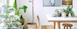 Conectate con la naturaleza: Estilo decorativo Biofilia
